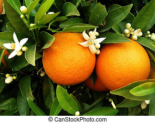 arancio, due, arance