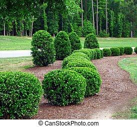 arbusti, cespugli