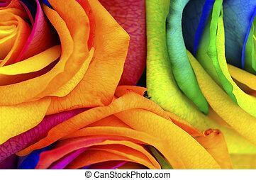 arcobaleno, fiore, rosa, o, felice