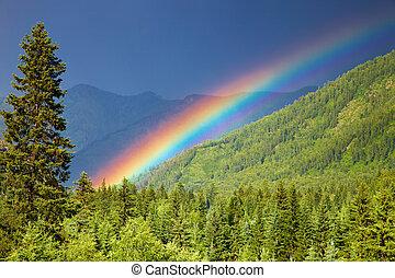 arcobaleno, foresta, sopra