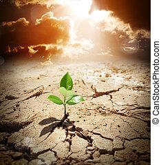 arido, terra, warming, clima, pianta