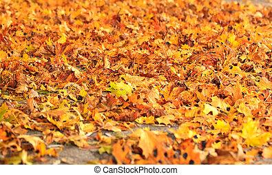 asciutto, foglie, mare, cadere