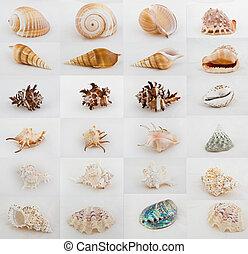 assortimento, collezione, seashell