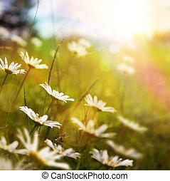 astratto, erba, fondo, estate, arte, fiore, natura