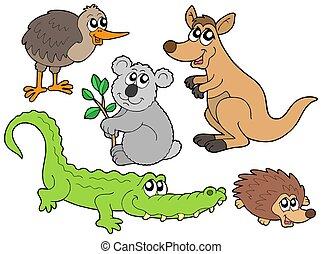 australiano, animali, collezione