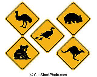 australiano, fauna, strada firma