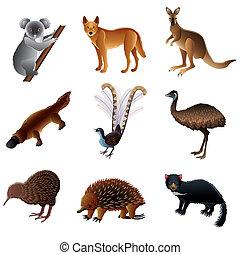 australiano, vettore, animali, set