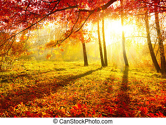 autunnale, albero, leaves., autunno, park., cadere