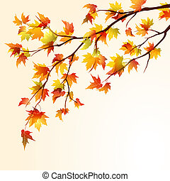 autunno, acero, ramo