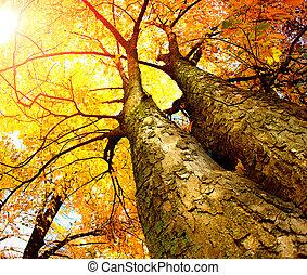 autunno, alberi., cadere