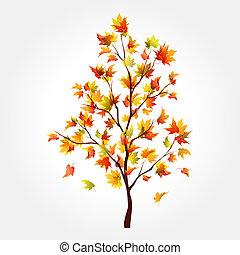 autunno, albero., acero