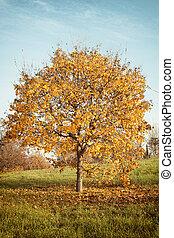 autunno, albero quercia, paesaggio, arancia