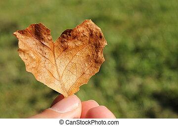 autunno, cuore, foglia