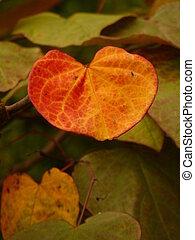 autunno, cuore, foglia, modellato