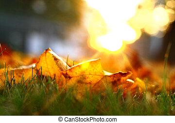 autunno, dorato