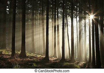 autunno, foresta nebbiosa, alba