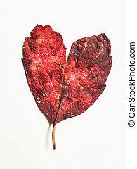 autunno, forma cuore, foglia