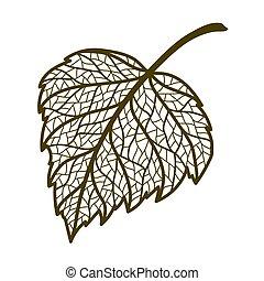 autunno, illustrazione, leaf., betulla