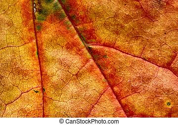 autunno, macro, foglia, #4