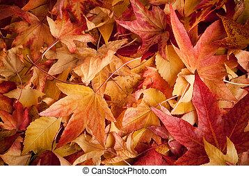 autunno, mette foglie