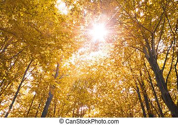 autunno, natura