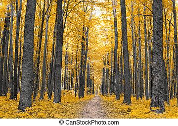 autunno, nature., foresta