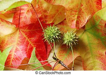 autunno parte, caduto, fondo
