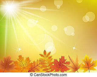 autunno parte, luce sole, fondo