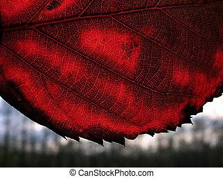 autunno, permesso