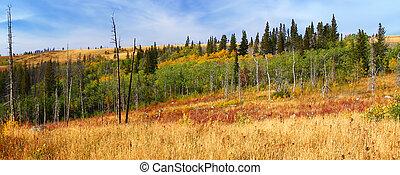 autunno, scenario, montana