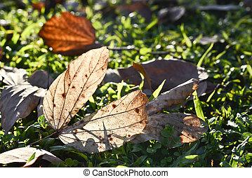 autunno, sole, foglie, caduto