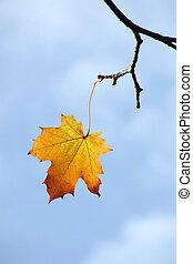 autunno, ultimo, foglia