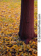 autunno, venuta