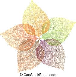 autunno, vettore, foglie