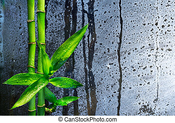 bagnato, caccie, vetro, bambù