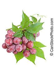 bagnato, rosso, succoso, uva