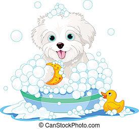 bagno, cane, detenere, lanuginoso