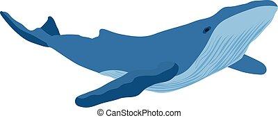 balena, vettore, illustrazione