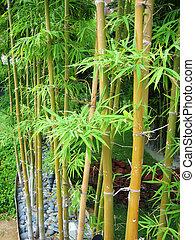 bambù, 2, giardino