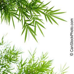 bambù, foglie
