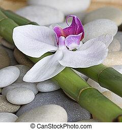 bambù, orchidea