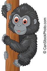 bambino, carino, gorilla, ascensione albero
