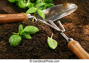 basilico, taglio, giardino, sprigs