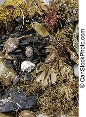 beachcombing., detriti, assortimento, vita marina