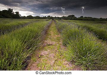 bello, alleggerimento, nubi, bulloni, campagna, campi, immagine, lavanda, drammatico, tempesta, vibrante, sopra, paesaggio, lunatico