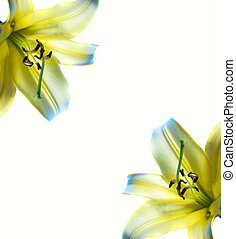 bello, astratto, lilly, cornice