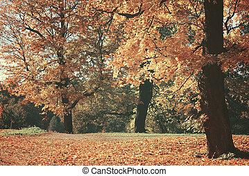 bello, autunno, immagine, sognante, foresta