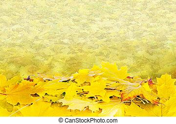 bello, autunno parte, acero, fondo