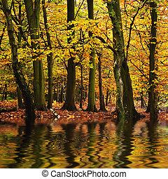 bello, autunno, stagione, cadere, riflesso, n, acqua colora, foresta, vibrante, paesaggio