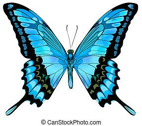 bello, blu, vettore, farfalla, isolato